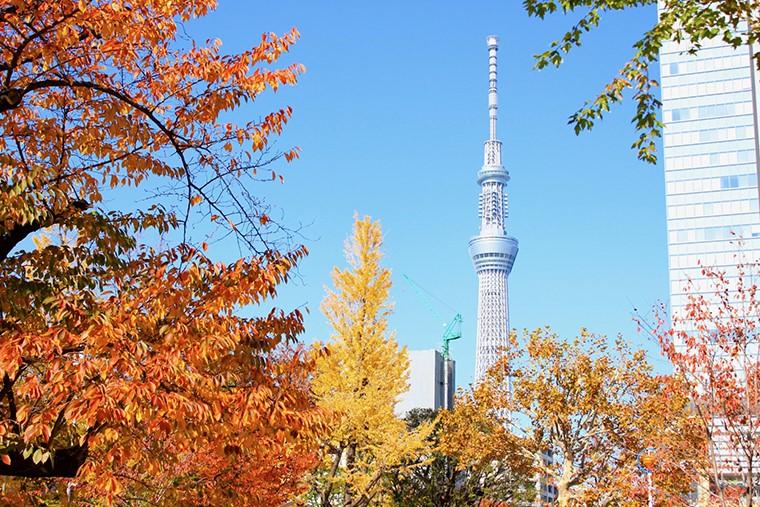 東京都墨田区錦糸町周辺で借金にお困りの方の債務整理方法